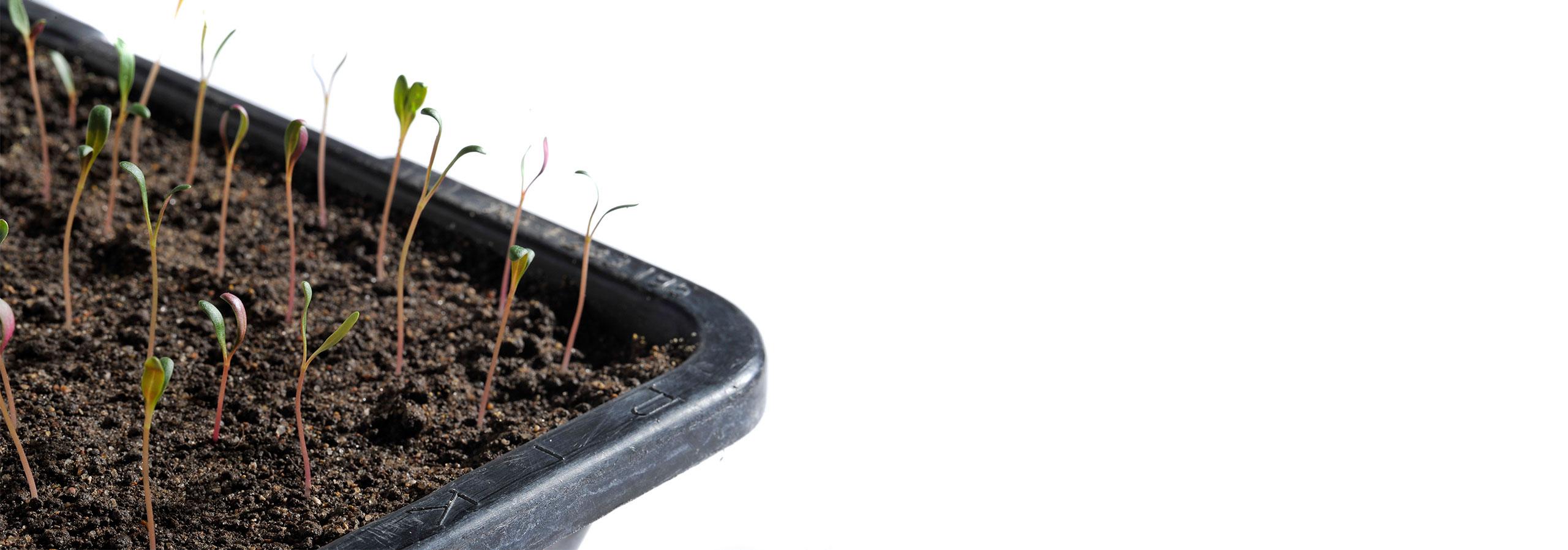 Pflanzenschutz/-stärkung